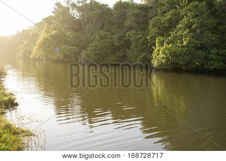 Tropical Forest By River Bank