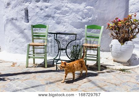 Traditional Greece series - cats and street tavernas
