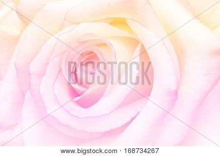 Romantic vintage Rose with Abstract blurred flower background
