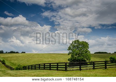 A vibrant green horse field on a summer afternoon in rural Kentucky