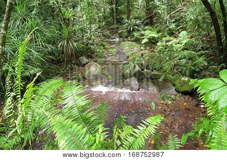 Daintree rainforest in far north Queensland river stream ferns water