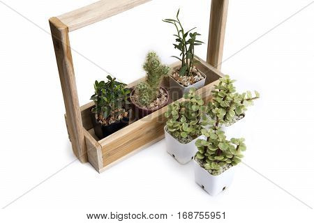 Decoration idea using various of cactus and small plant with wooden houseplant.