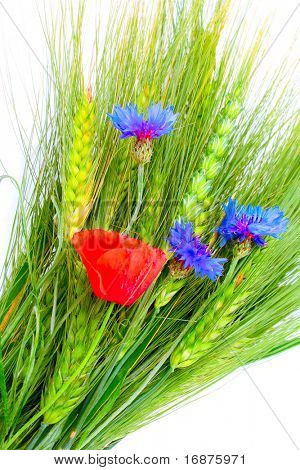 Grain and summer flowers. Isolated on white background.