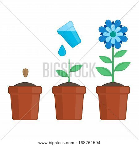 Steps of a plant growing isolated in white. Timeline infographic of planting flower process. Flower plants growth stages. Vector illustration EPS10.