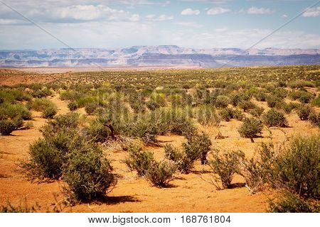 Small trees in the desert with canyon background