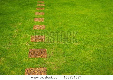 pathway in garden with a Freshly Mowed lawn . green garden, Landscaping in the garden. The path in the garden.pathway in the park