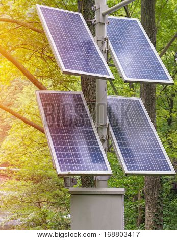 Photovoltaic Using Renewable Solar Energy In Forest