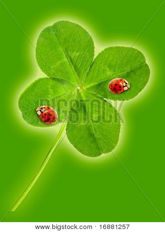 Green quarter-foil with ladybugs,symbol of a St Patrick day .