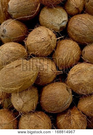 harvest, food and agriculture concept - close up of coconuts