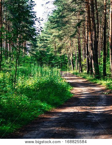road in the forest, the sun rays penetrate through the trees beautiful landscape