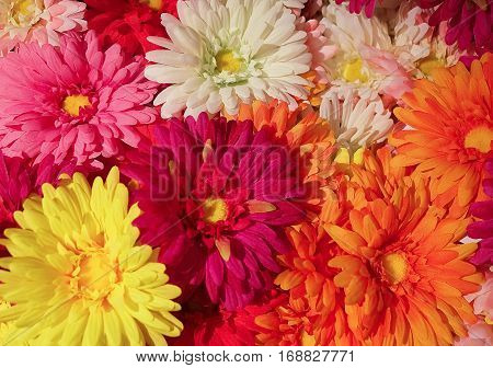 Background of Pink Yellow Orange and White Artificial Chrysanthemum Flowers for Home and Building Decoration.