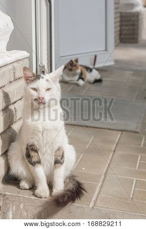 homeless cat sitting at the door on the porch of the store