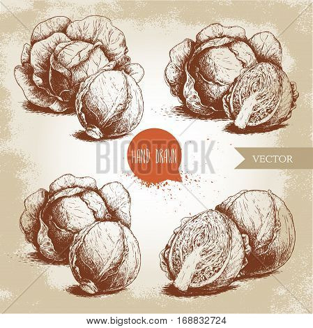Hand drawn sketch style set of cabbages. Cabbage with leafs cabbage head half of cabbage. Organic fresh food vector illustration.