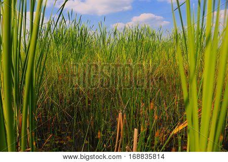 bog plant