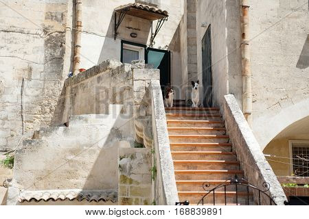 Two dogs in the historic center of Matera Basilicata Italy