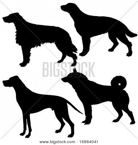 silhouettes of the dogs