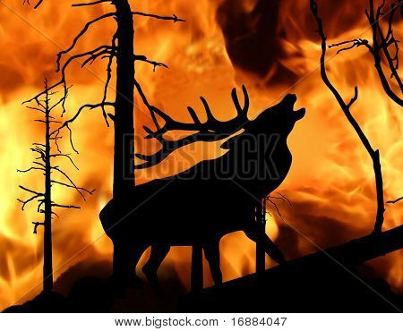 deer amongst wildfire