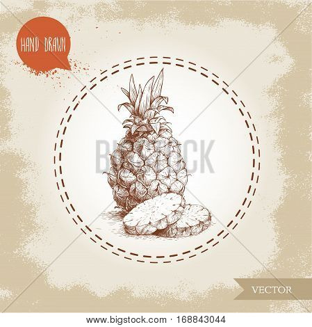 Hand drawn sketch style ripe pineapple with pineapple slices. Vector pineapple eco fruit illustration. Hand drawn ananas