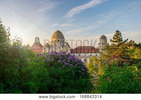 Spring in city of Budapest with blooming lilac in the foreground and old building and picturesque sky on background