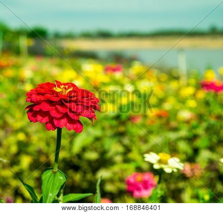 Beautiful flower gardens planted along the Mekong River to Thailand many species.
