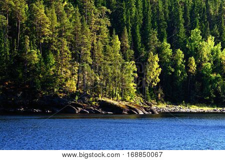 Late Summer Pine-tree Green Northern Forest on a Lake Shore on a Sunny Day. Photo taken on Valaam Island in Lake Ladoga, Karelia, Russia.