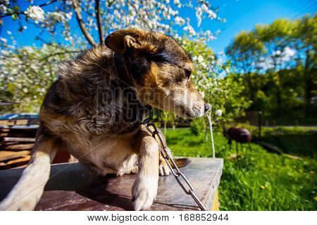 cute dog in the garden among the blooming trees