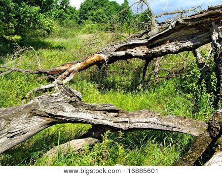 old tumbled oak