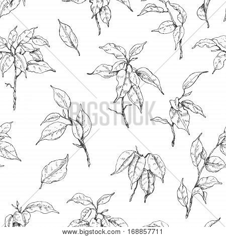 Hand drawn branches and leaves of tropical plants. Monochrome Ficus Benjamin sketch pattern. Black and white seamless texture.
