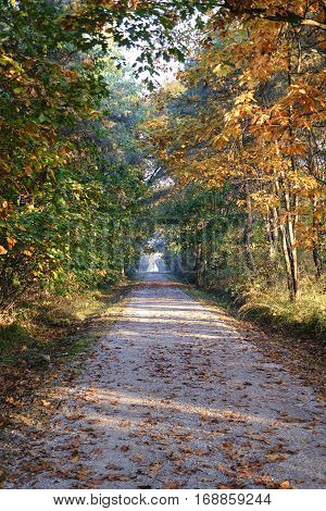 Milan (Lombardy Italy): path into the Park of Groane at fall (october)