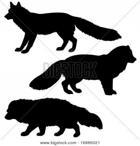 vector silhouette polar fox, badger, vixens isolated on white background