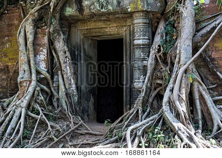 Prasat Pram sanctuary entrance in Koh Ker site, Cambodia. Koh Ker is an archaeological site with more than 180 sanctuaries, most of them covered by roots, in protected area of 81 square kilometres