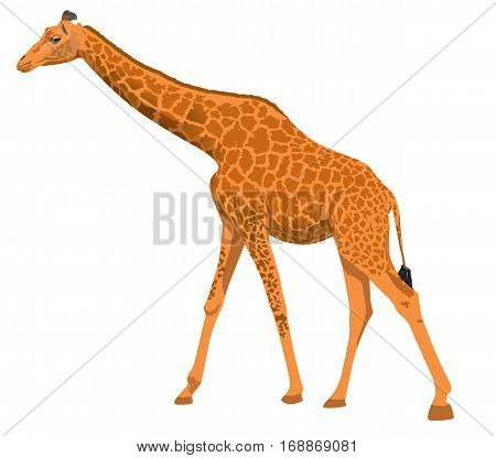 Isolated vector giraffe is drawn by hand