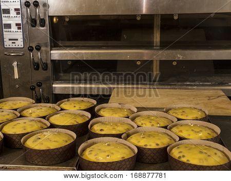 Panettone dough ready to bake into oven