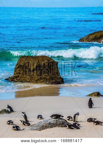 Huge boulders and African black-white penguins on the beach of Atlantic Ocean. Boulders Penguin Colony in the Table Mountain National Park.  The concept of ecotourism