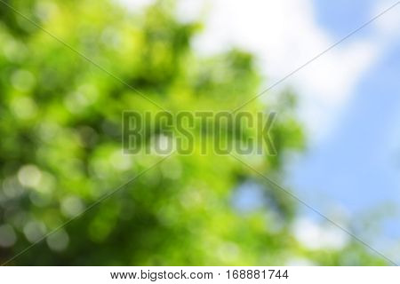 Abstract natural background. Young foliage and blue sky. Spring. Bright day. Sunlight. Blurred fresh spring background.