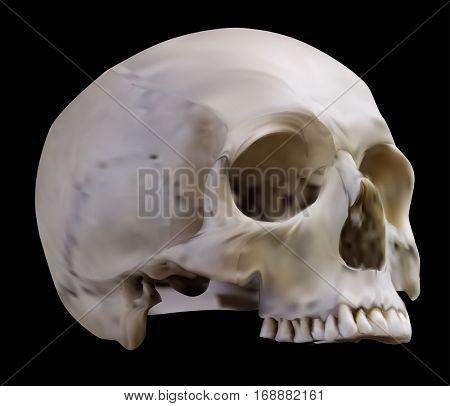 illustration with skull isolated on black background