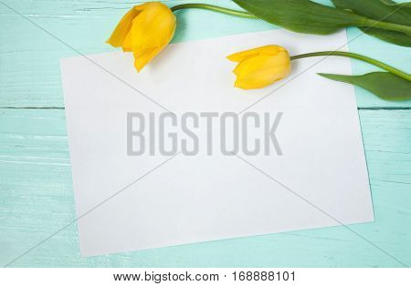 Beautiful Blank Card for Easter, March 8, valentines day, mothers day. Two yellow tulips on wooden light blue background with sheet of paper. Top view, Flat lay.