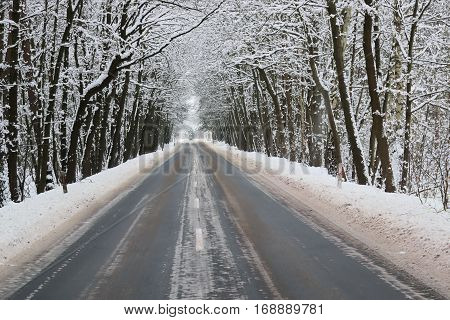 The photo shows an asphalt road leading through the forest. It's winter. The surface of the earth and the trees cover layer of snow. Road surface is wet, places arrears on the layer of wet snow. It is a cloudy day.