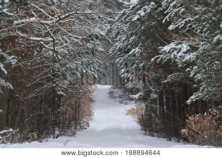 The photo shows a forest road. It's winter. Earth and tree branches cover layer of snow. The surface of the road is unpaved, uneven and bumpy. Wiedoczne are clear rut.