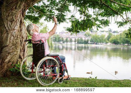 Senior man in wheelchair, enjoying time outdoors.