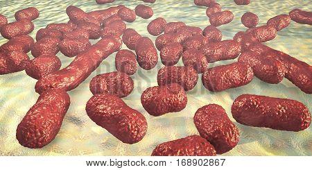 Bacterium Acinetobacter baumannii, multidrug resistant nosocomial bacterium. 3D illustration shows morphology of Acinetobacter such as short rods and sometimes long filamentous cells