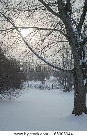 The hazy sun is rising through the snow laden branches of a large maple tree in the winter time.