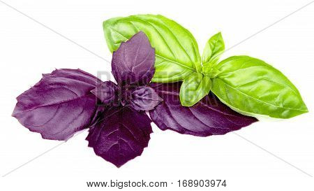Purple and green basils isolated on white background