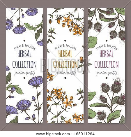 Set of 3 color vector herbal tea labels with burdock, chicory and saint john wort hand drawn sketch. Placed on white background.