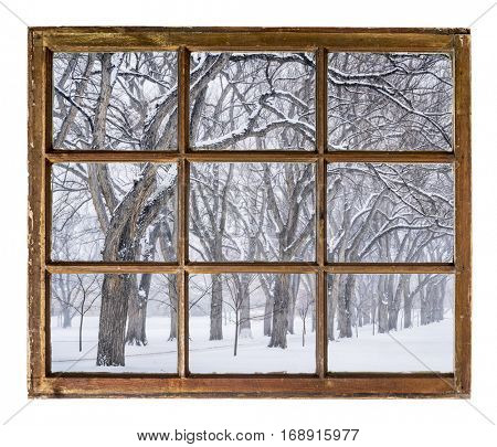 Alley of old elm trees in a snow blizzard as seen  through vintage, grunge, sash window with dirty glass