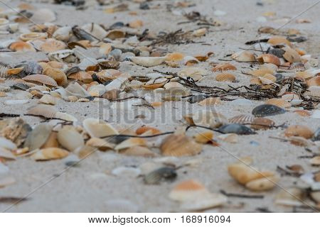 Low Angle of Shells and Sea Weed covering Beach