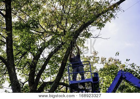man on aerial platform cutting tree with chain saw