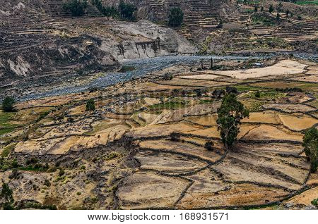 Farming terraces in the Colca Valley Peru. View into the Colca Valley with terraced fields .The deepest canyons in the world