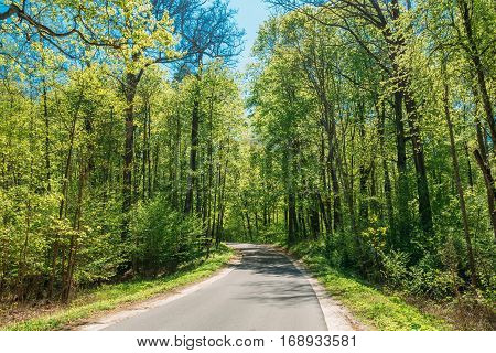Asphalt Country Road Through Spring Trees Woods Forest In Sunny Day. Sunlight In Deciduous Forest, Summer Nature, Sunny Day. Summer Forest Landscape In Belarus Or European Part Of Russia