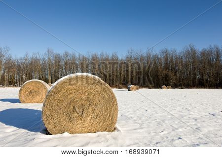 Golden hay bales in a snow covered winter field. Rural landscape with focus on the foreground bale and copy space in the sky if needed.